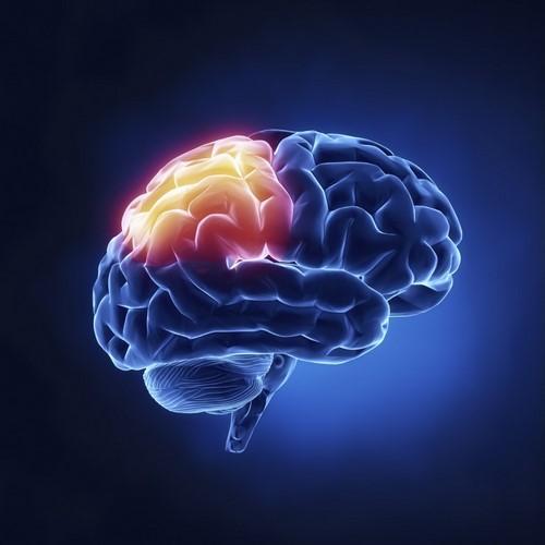 Cerveau 2 opt